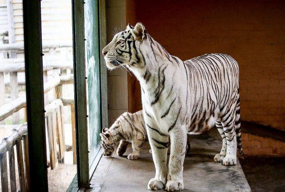Зоопарк «Сафари» Акция
