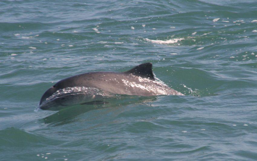 Дельфины становятся визиткой Бердянска