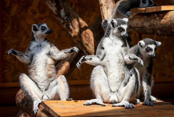 Зоопарк Сафари в Бердянске