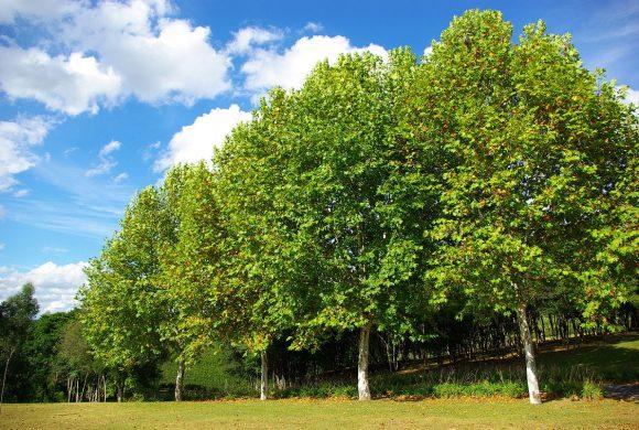 1000000 деревьев за 24 часа